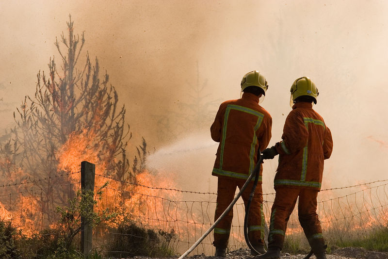 Forest fire_leppre
